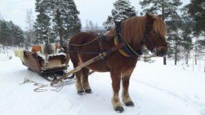 Sköllingas hästturer i Järvsö